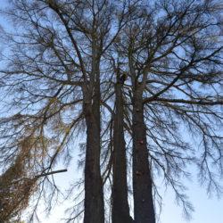 coupe partielle arbre