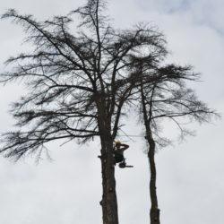 demontage complet arbre