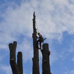 abattage arbre suppression couronne