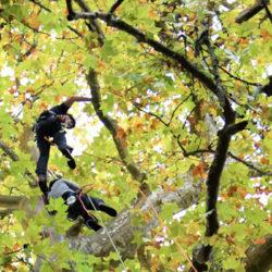 arboristes grimpeurs esthetique arbre