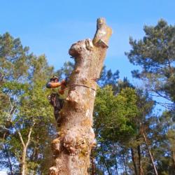 abattage arbre par demontage saucats