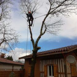 abattage arbre centre ville gironde