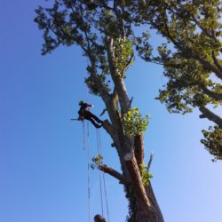 abattage arbre pessac