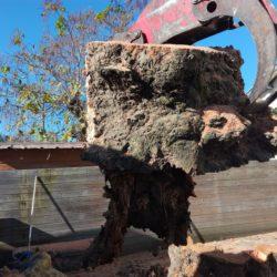 extraction de souche arbre